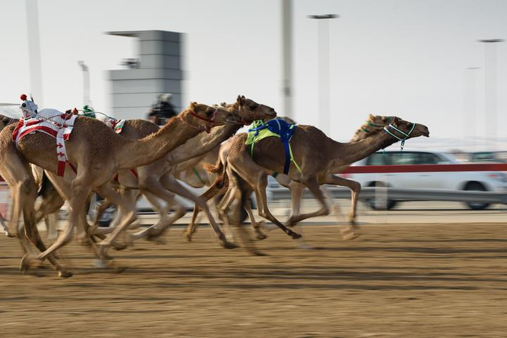 Camel_Racing_Dubai