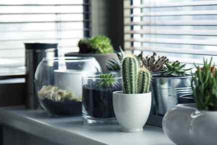 Indoor Gardens - The Ideal Summer Space